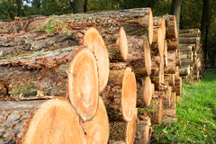 Logs forest Stock Photography