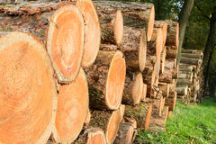 Logs forest Royalty Free Stock Photos