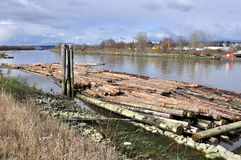 Logs on fraser river Royalty Free Stock Images