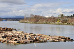 Logs on fraser river Royalty Free Stock Photography