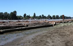 Logs on Fraser River Stock Photography