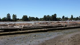 Logs on Fraser River Stock Photos