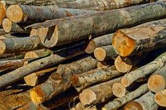 Logs. Fresh piled tree. Logs ready for the lumberyard Stock Images
