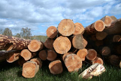 Logs on a glade. Royalty Free Stock Photo