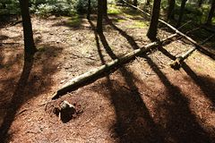 Logs on the ground Stock Photo