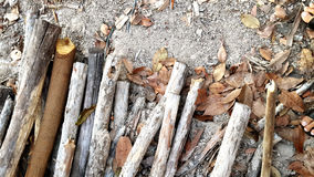 Logs on the ground Stock Image