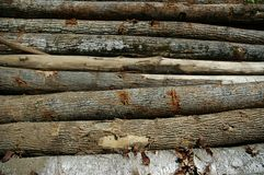 Logs horizontal. Pile of freshly cut trees. Great for backgrounds Royalty Free Stock Photography