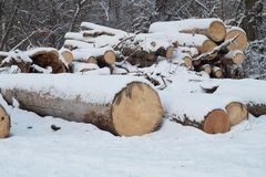 Logs. Huge Logs Shaded By Snow In The Winter Park. Stock Photos