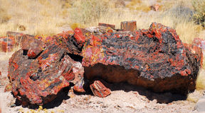 Free Logs In The Petrified Forest Stock Images - 11712964