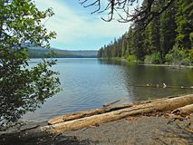 Logs on the Lakshore. Suttle Lake near Sisters, OR - east end looking west royalty free stock photos