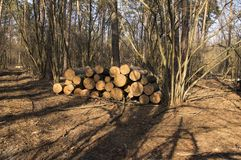 Logs of trees stacked in a large pile after deforestation royalty free stock photos