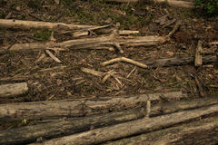 Logs lie in the forest Chips. Sticks lie in the woods Royalty Free Stock Image