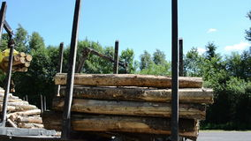 Logs loading. Heavy equipment loading with clipper cut logs stock video