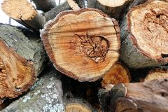 Logs. Log cuts. Stack of logs. Stack of firewood. Logs cuts prepared for fireplace. Woodpile. Wood for fireplace. Wood for winter. Firewood background royalty free stock photo