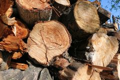 Logs. Log cuts. Stack of logs. Stack of firewood. Logs cuts prepared for fireplace. Woodpile. Wood for fireplace. Wood for winter. Firewood background royalty free stock images