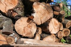 Logs. Log cuts. Stack of logs. Stack of firewood. Logs cuts prepared for fireplace. Woodpile. Wood for fireplace. Wood for winter. Firewood background royalty free stock photos