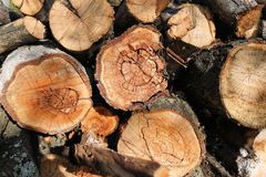 Logs. Log cuts. Stack of logs. Stack of firewood. Logs cuts prepared for fireplace. Woodpile. Wood for fireplace. Wood for winter. Firewood background royalty free stock image
