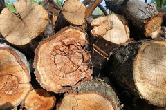 Logs. Log cuts. Stack of logs. Stack of firewood. Logs cuts prepared for fireplace. Woodpile. Wood for fireplace. Wood for winter. Firewood background stock image