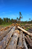 Logs in the logging. In Russia at sunny day Royalty Free Stock Photo