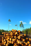 Logs in the logging. Harvesting of wood in Russia Stock Photography