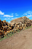 Logs in the logging Stock Image