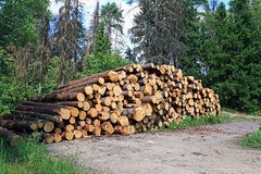 Logs in the logging Royalty Free Stock Photography