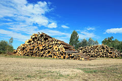 Logs in the logging Royalty Free Stock Images