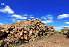 Logs in the logging Royalty Free Stock Photo