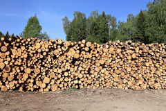 Logs in the logging Royalty Free Stock Image