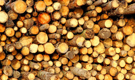 Logs in the logging Royalty Free Stock Photos