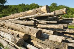 Logs loosely piled before being cut up Stock Image