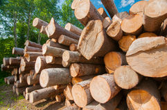 Logs at lumber mill. Close up of logs stacked at lumber mill in Ontario, Canada Stock Photo