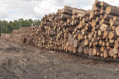 Logs at lumber mill. Stacks of trees or logs at a large lumber mill, piled to be processed into building material Stock Images