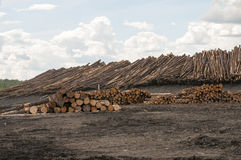 Logs at lumber mill Stock Photography