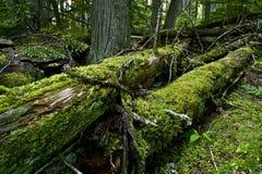 Logs moussus image libre de droits