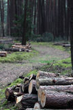 Logs near the forest road. Cut tree logs in the middle of the forest Stock Image