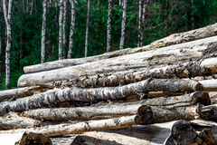 Logs near the forest Stock Photo