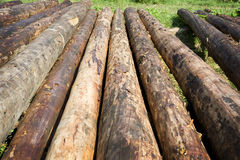 Logs For New Log Homes Royalty Free Stock Photos