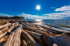 River summer landscape. The river Ob, Novosibirsk oblast, Siberi. Logs of old trees on the coast of the Ob of the Novosibirsk reservoir. The river Ob Royalty Free Stock Photo