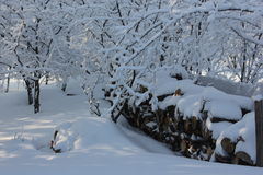 Logs para a chaminé na cerca na neve Imagens de Stock Royalty Free