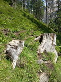 Logs in path around Braies lake Royalty Free Stock Images