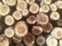 Logs in a pile Stock Images