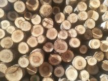 Logs in a pile Stock Photos