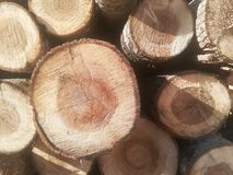 Logs in a pile Stock Image