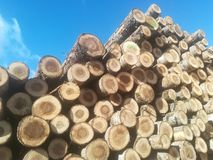 Logs in a pile Royalty Free Stock Photo