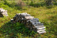 Stack of sawn wood. The logs are piled on a forest swamp on Anzersky Island, Arkhangelsk Region, Russia royalty free stock image