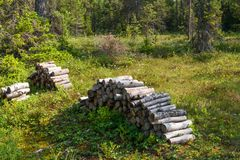 Firewood supply. The logs are piled on a forest swamp on Anzersky Island, Arkhangelsk Region, Russia stock photo