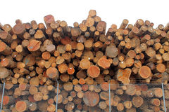 Logs Piled High Behind a Chain Link Fence Royalty Free Stock Images