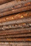 Logs are piled up. The timber industry royalty free stock photography