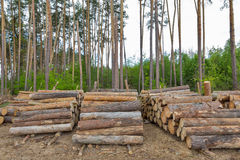 Logs in the pine forest Royalty Free Stock Photography